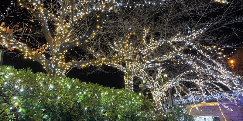 いばらきイルミフェスタ灯の元茨木川緑地のイルミネーション03